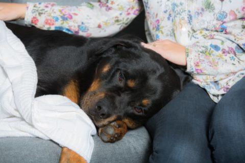 Snuviga hundar